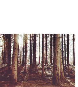 Kielder Trees, Northumberland (Greeting Card)