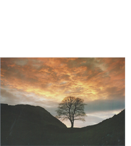 Sycamore Gap, Northumberland (Greeting Card)