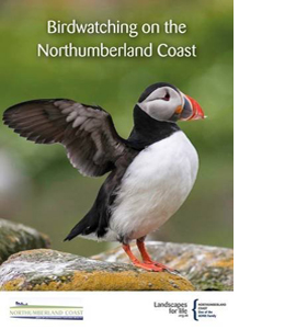 Birdwatching on the Northumberland Coast